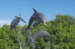 Three dolphins in a jump from the water, in splashes of water, against a background of trees. And a blue cloudless sky Stock Photos