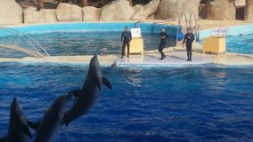 Three dolphins jumping. They jump during the entertainment in Marineland, Antibes, south of France Royalty Free Stock Photography