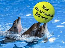 Three Dolphins swim in blue water with a yellow ball labeled now we accepted bitcoins. Dolphins swim in blue water with a yellow ball labeled now we accepted stock image