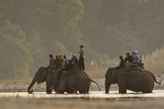 Three domestic elephant in jungle safari in Nepal Royalty Free Stock Photography
