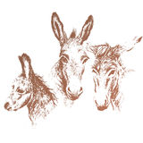 Three donkeys. Full vector illustration Stock Images