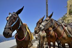 Three donkeys Stock Photos