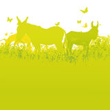 Three donkeys on the summer meadow. Three donkeys on the green summer meadow Royalty Free Stock Photography