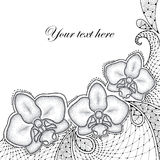 Three dotted moth Orchid or Phalaenopsis with decorative lace in black  on white background. Royalty Free Stock Photography