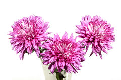 Three Double Pink Chrysanthemums in Glass Vase Stock Image
