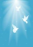 Three dove Stock Image