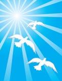 Three dove into blue sky Stock Image