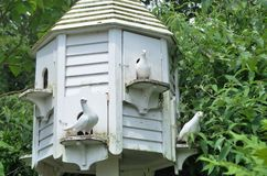 Three Doves in white Dovecote Stock Image