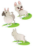 Three drawings of  French Bulldog Royalty Free Stock Photos