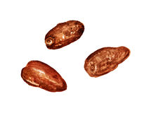 Three dried dates. Watercolor image of three dried dates on white background royalty free illustration