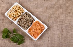 Three dried legumes with fresh herbs. Three types of dried legumes with fresh coriander Royalty Free Stock Photography