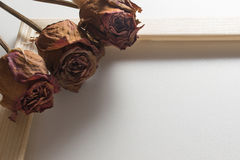 Three dried red roses with wooden frame Royalty Free Stock Photography