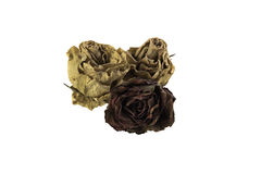Three dried roses on a white background isolated Royalty Free Stock Photos