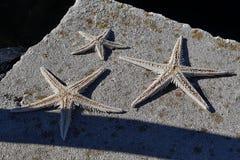 Three dried starfishes (asteroidae) on concrete molo. Three white dried starfishes (asteroidae) on concrete molo royalty free stock photo