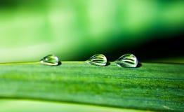 Three droplets. Three pure rain droplets on green leaf Royalty Free Stock Image