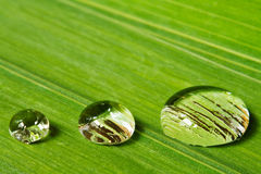 Three droplets on leaf background Royalty Free Stock Image