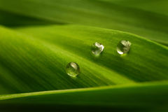 Three drops of water on a green leaf Royalty Free Stock Images