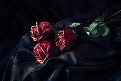 Three Dry Roses Royalty Free Stock Photography
