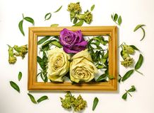 Three dry roses with leaves, two white roses, one pink rose stock photos