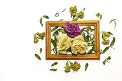 Three dry roses with leaves, two white roses stock image