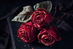Three dry roses Royalty Free Stock Photography