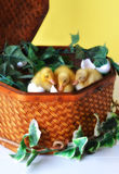 Three Ducklings in a Basket Stock Photos