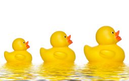 Three ducks. Three yellow rubber ducks relected in water royalty free stock image