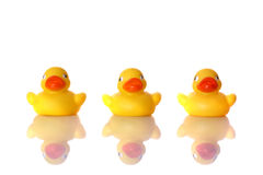 The Three Ducks Royalty Free Stock Images