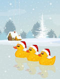 Three ducks with Christmas hat Royalty Free Stock Image