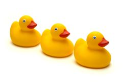 The three ducks isolated Stock Images