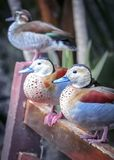 Three ducks stting on bench stock images