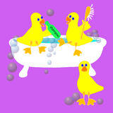 Three Ducks in a Tub Stock Images