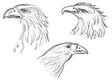 Three eagle head sketches isolated on white Stock Images