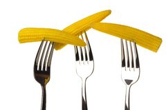 Three ear of corn on a fork Royalty Free Stock Images