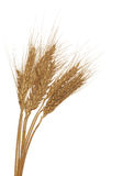 Three ear of wheat group Stock Photography