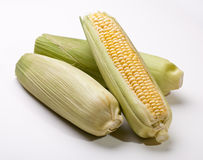 Three Ears of Corn Stock Image