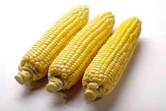 Three Ears of Corn Royalty Free Stock Image
