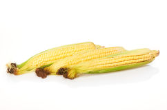 Three ears of corn isolated on white Stock Images