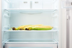 Three ears of corn on shelf of open empty refrigerator Royalty Free Stock Images