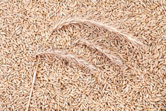 Three ears on a grain background Stock Photos