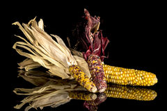Three ears of Indian corn on a table Royalty Free Stock Photos
