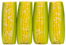 Three ears of supersweet corn. Three ears of supersweet yellow and white corn isolated on white background. Includes clipping Path Stock Photos