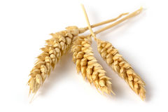 Three ears of wheat. On white background royalty free stock images