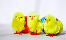 Three Easter Chicken. And two eggs stock image