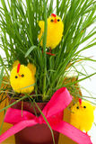 Three easter chickens near a grass bush Royalty Free Stock Photos