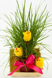 Three easter chickens near a grass bush Stock Photo