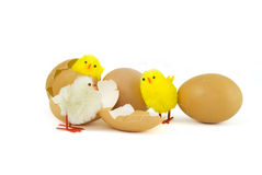 Three Easter chicks Stock Image