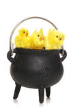 Three easter chicks in a cauldren Royalty Free Stock Photos