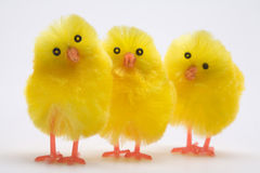 Three easter chicks close up. Three easter chicks close-up on a white background stock image