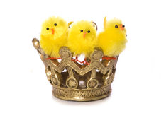 Three easter chicks in a crown Stock Photo